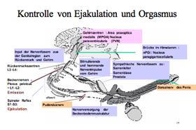 Störungen Der Ejakulation Urologe Und Androloge Urologische