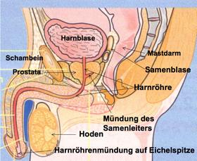 wie stimuliert man die prostata